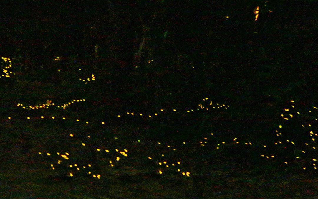 """""""La Magia delle lucciole""""."""