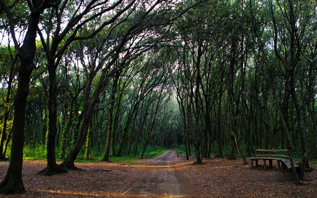 Foresta del Mito – La Foresta di Cuma
