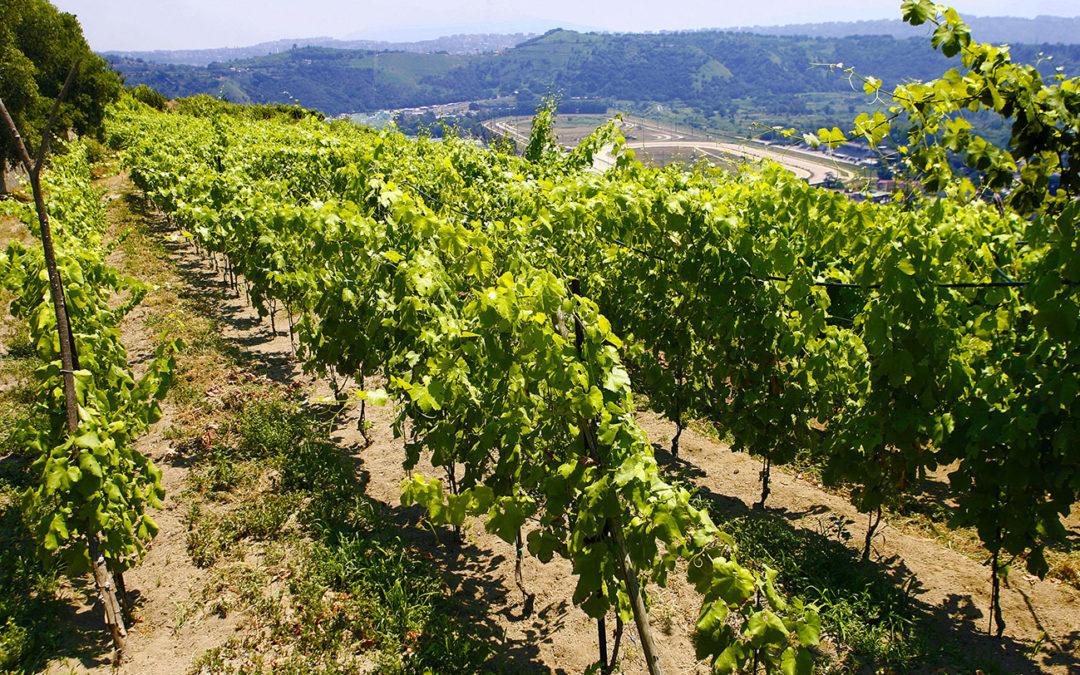 Tour Enologici | Vino e Natura
