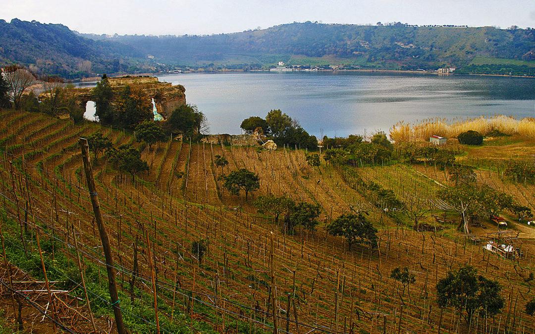 Tour Enologici | Vino, storia e mito